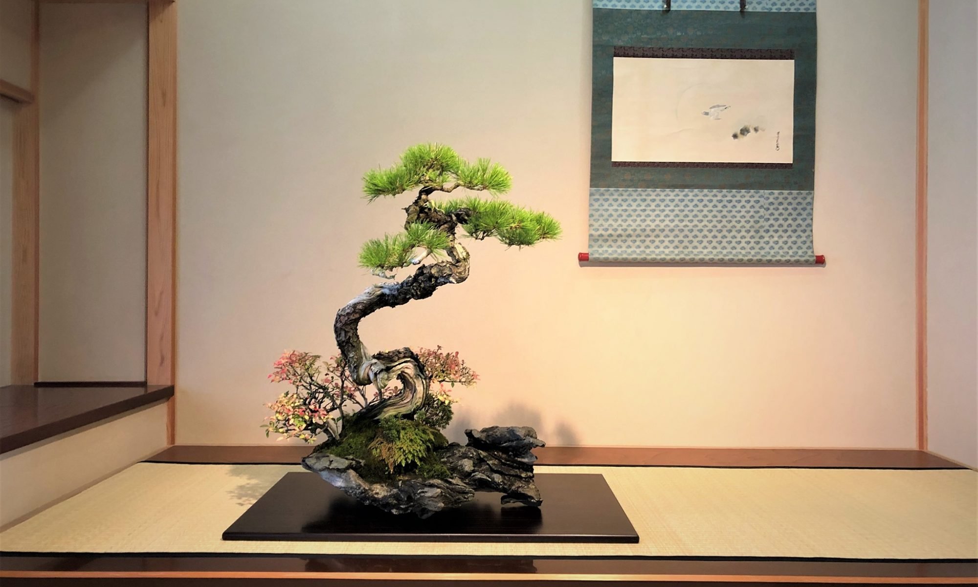Axolotl bonsai